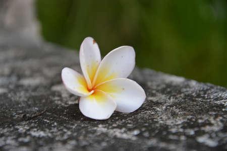 wayside: Wayside Flowers
