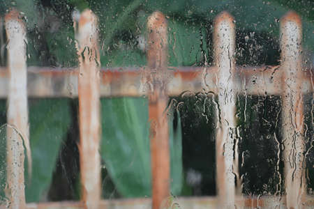 drench: Along the fence of a house