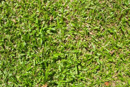 Grass Stock Photo - 8704099