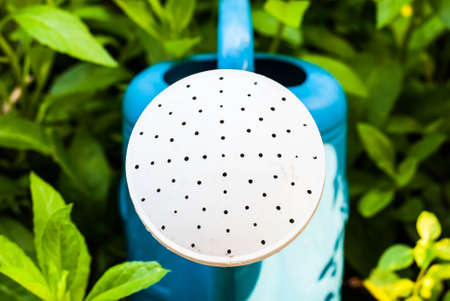Blue watering pot in garden photo