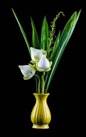 White lotus flower in a vase on Black photo