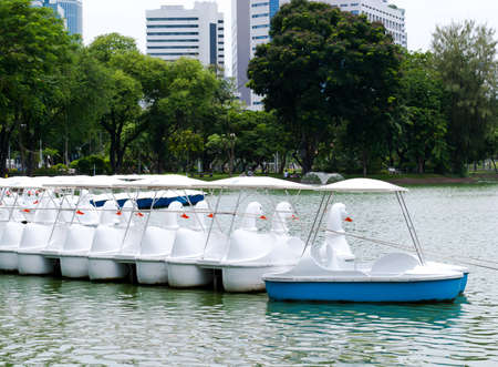 cygnet: White paddle boats in the garden