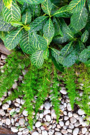 Beautiful of fern in the garden