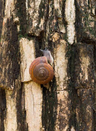 Snail on a tree in Garden