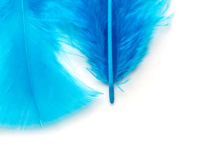 Close-up of Blue feather  isolated on white background Stock Photo