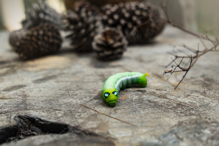 Green worm caterpillar animals isolate on wood ans pine cone blur background