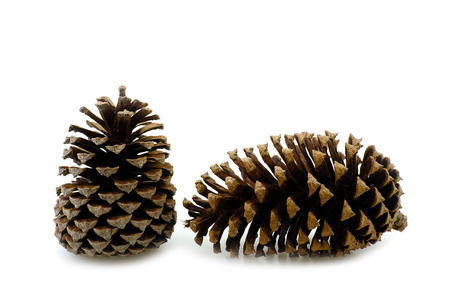 Two pine cone dry on white background