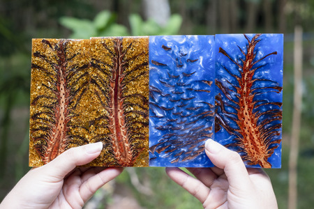 Casting epoxy resin Stabilizing pine cone blue abstract art background