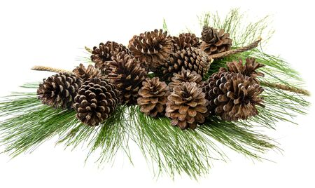 Group of pine cone on green leaf at white background