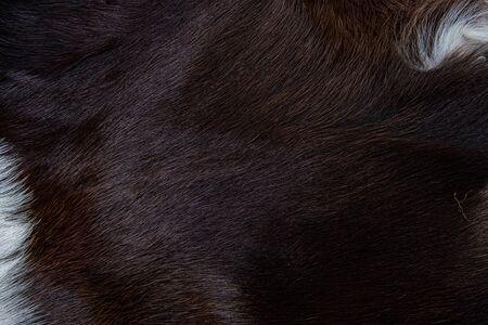 Textur des braunen Kuhfellmantels mit schwarzen weißen und braunen Flecken im Fell