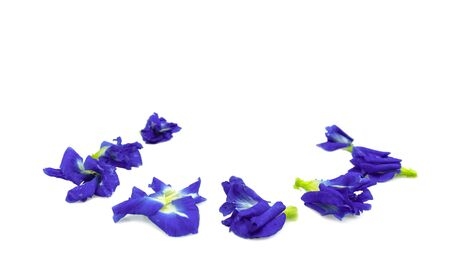 Butterfly Pea ( Asian pigeonwings) isolated at white background Banco de Imagens