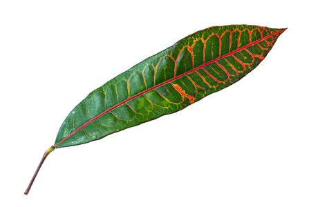 Beautiful plant leaf at isolared white background close up