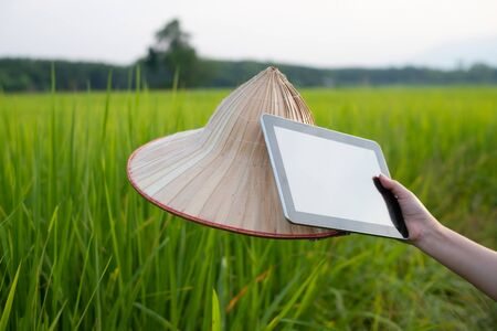 Woman farmer hand holding tablet and palm leaf hat while in green rice seedlings at a paddy field with beautiful sky and cloud, The sun setting over a mountain range in the background, Rural scene  in Thailand
