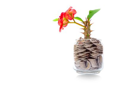 Tree with flowers growing on glass bowl bank from a pile of coins with white background, Money stack for business planning investment and saving the concept Stok Fotoğraf