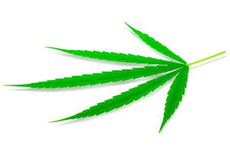 Green medicinal plant cannabis leaf at white background close up Banco de Imagens