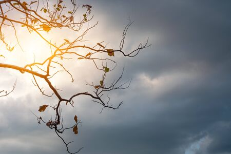 Beautiful tree branch and leaf at the sun sky in the background
