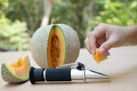 Farmer measures the sugar content of the organic melon with Brix refractometer
