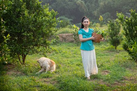 Front young gardener Asia woman smiling and carrying the basket Thai in the honey tangerine oranges garden, Happiness and healthy lifestyle concept