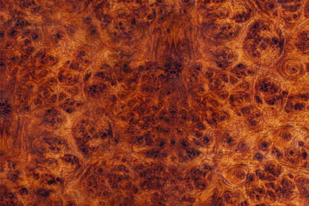 Nature Burma padauk burl wood striped are wooden beautiful pattern for crafts or art background