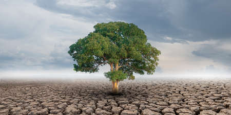 Big tree growth on cracked soil in arid areas of landscape
