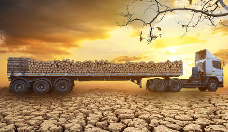 Loaded timber trucks arriving and park on the cracked soil in arid areas of a landscape at sunset and cloud