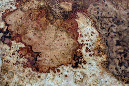 Nature oak burl wood striped is a wooden beautiful pattern for crafts or background