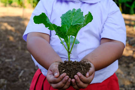 Girl hand holding seedling cabbage vegetable in the organic farm Stok Fotoğraf