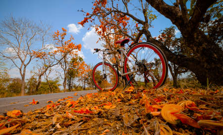 A bike parked on the road at full of beautiful orange flower background, The concept of travel and freedom Imagens