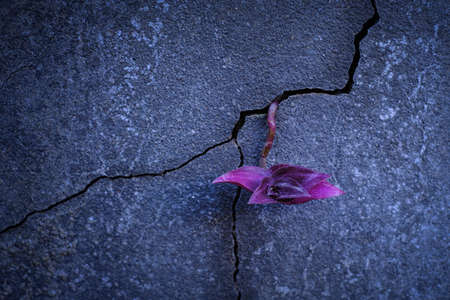 Purple young tree plant growing through the cracked concrete floor