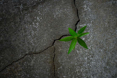 Young tree plant growing through the cracked concrete floor Imagens