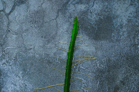 Cactus growing in the cracked concrete wall