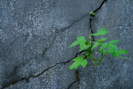 Young tree plant growing through the cracked concrete floor Archivio Fotografico
