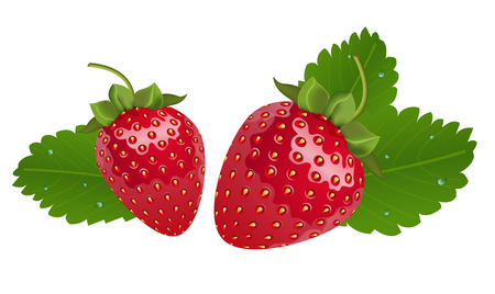 Vector realistic strawberries with leaves. Two isolated berries in white background