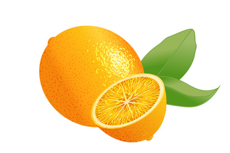 Vector realistic orange with leaves. Whole citrus and a chopped half with leaves. Illustration