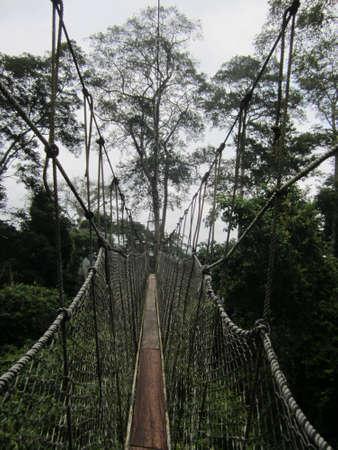 rope bridge: Treetop ropewalk in Ghana
