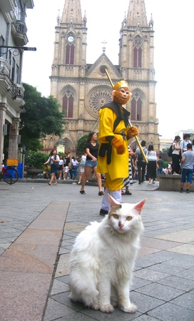 gaze: The Gaze of Monkey and Cat Editorial