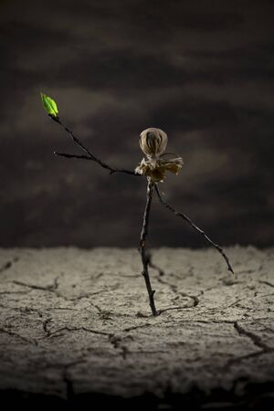 cranny: Scarecrow in desert looking a leaf growing from his arm - branch