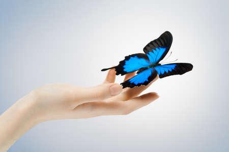 donna farfalla: Farfalla seduta su un palm Archivio Fotografico