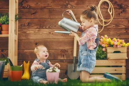 caring for: Cute children girls caring for her plants. Sisters watered flowers in pots. Spring concept, nature and care. Two little girls gardening in the backyard. Stock Photo