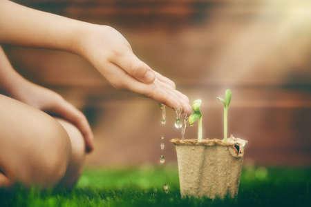 crecimiento planta: El pequeño niño se ocupa de las plantas. Niño de riego de un brote. Concepto de primavera, la naturaleza y el cuidado.