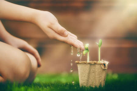 watering: Little child cares for plants. Child watering a sprout. Spring concept, nature and care.
