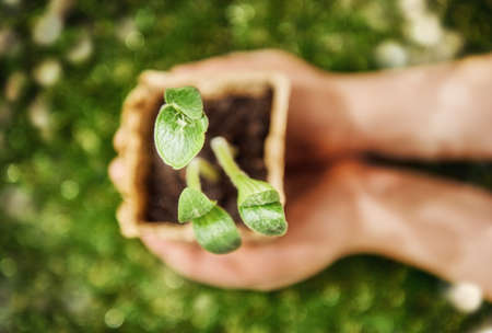 plant hand: Hands holding sprout plants. Close up, top view. Spring concept, nature and care.