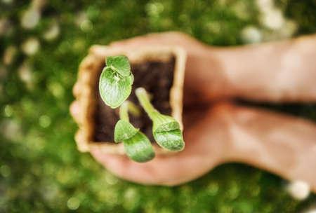 educacion ambiental: Manos que sostienen las plantas germinadas. De cerca, vista desde arriba. Concepto de primavera, la naturaleza y el cuidado.