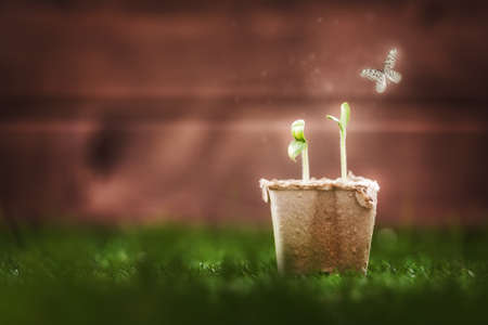 protection concept: Seedling plants in the grass. Spring concept, nature and care.