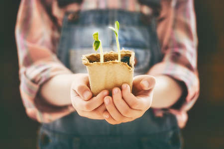 child protection: Little child cares for plants. Spring concept, nature and care.