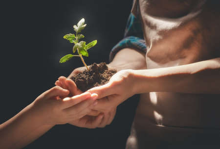 educacion ambiental: Concepto de generación y desarrollo. El adulto y el niño están sosteniendo en brotes verdes de las manos. Primavera, naturaleza, eco y cuidado.