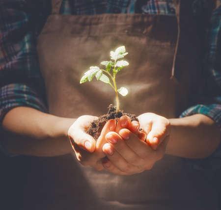 Concept de la production et le développement. Personne tient dans les mains pousse verte. Printemps, la nature, l'éco et de soins.