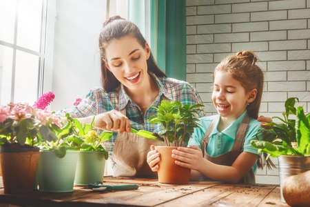 helps: Cute child girl helps her mother to care for plants. Mom and her daughter engaged in gardening near window at home. Happy family in spring day.