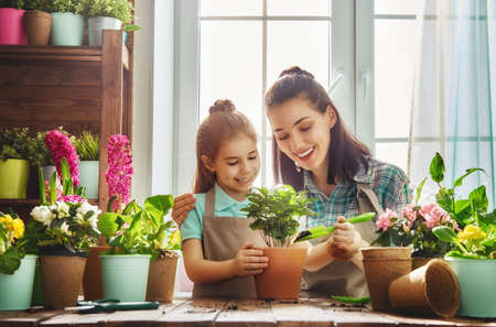 Cute child girl helps her mother to care for plants. Mom and her daughter engaged in gardening near window at home. Happy family in spring day. Zdjęcie Seryjne - 75653863