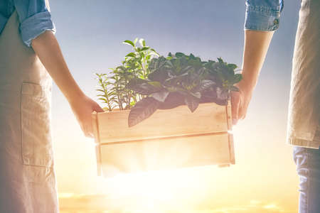 Concept of generation and development. Adult and child are holding in hands seedlings. Spring, nature, eco and care. Stockfoto